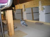 Bauabnahme durch eine statisch interessierte Taube