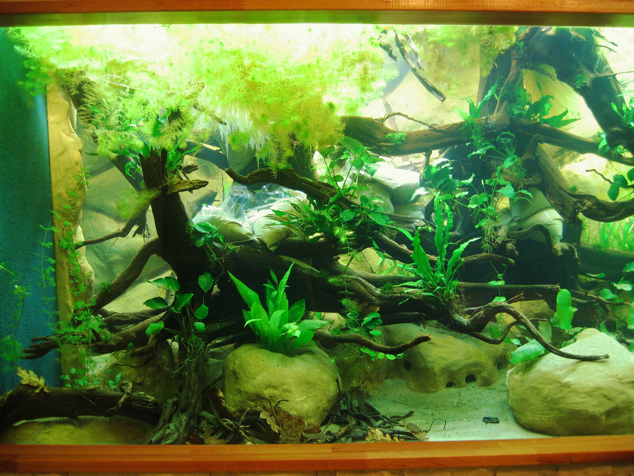 die pflanzen in meinem 5m s damerika aquarium. Black Bedroom Furniture Sets. Home Design Ideas