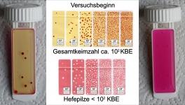 Die Probe vor dem Ausschalten: ca. 10<sup>2</sup> KBE